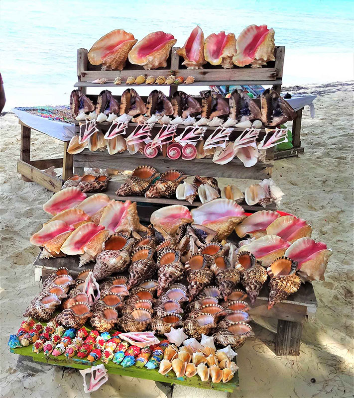 Conch shells Turks and Caicos