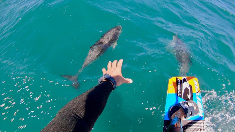 Kevin-Langeree-kiting-with-dolphins