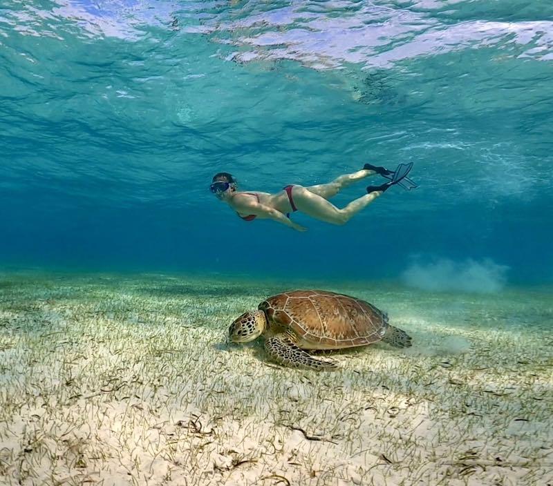 Bajamas turtle kite trip