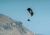 Naish Dash 9M Test Review